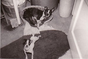 1951 COOKIE AND SPARKY