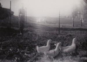 1952 DONALD< DAISY & LAZY