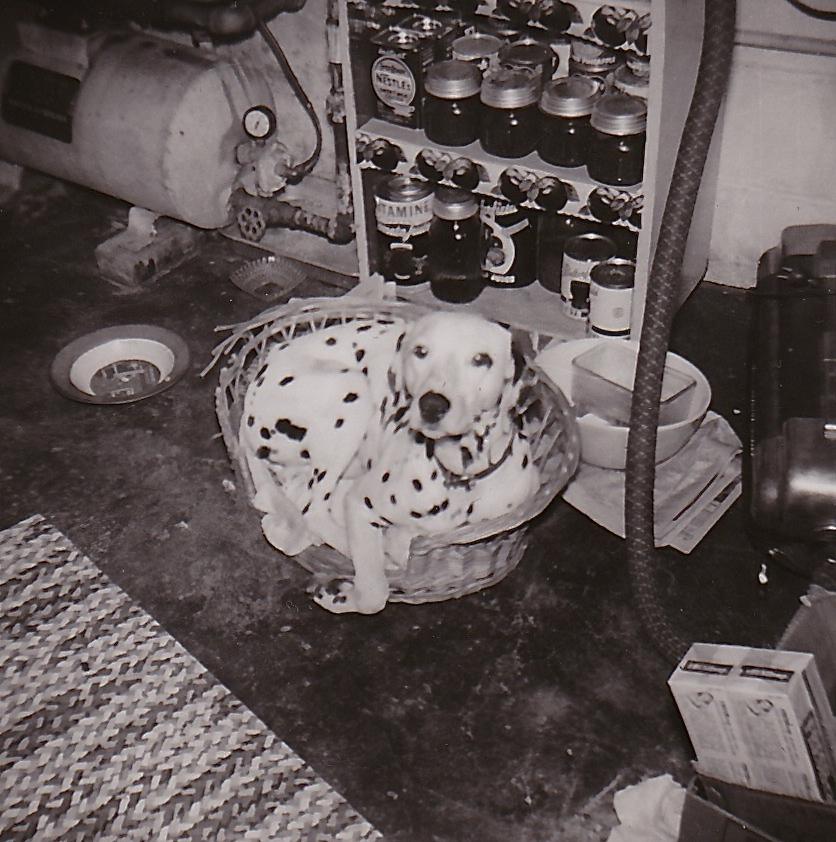 1955 PRINCE