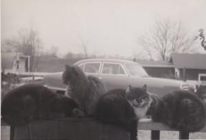 1954 CAT LINEUP