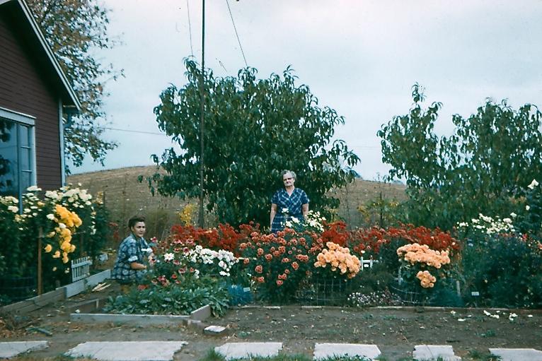 1958 GRANDMA`s FLOWERS