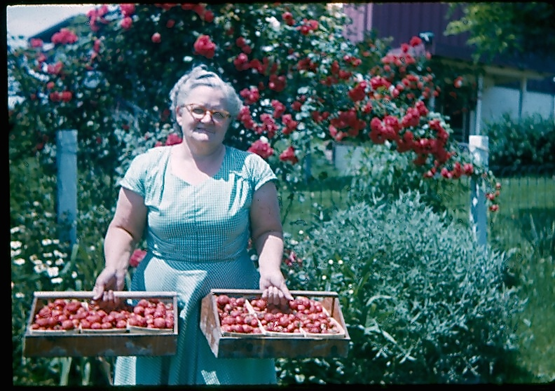 GRANDMA BARRETT AND HER STRAWBERRIES