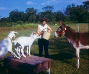 MOTHER WITH GOATS & BURRO